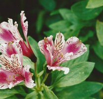 Allergy Plants For Dogs